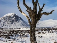 MG_8595-old-tree-ranock-moor